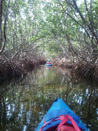 Mangrove tunnels are so quiet and relaxing and provide nice shade from the direct sun.