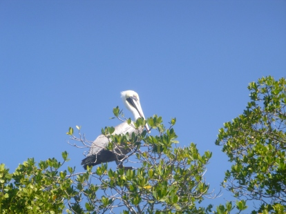 This park is part of the Great Florida Birding Trail
