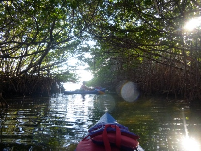 The one mangrove tunnel we found - full of crabs and oysters